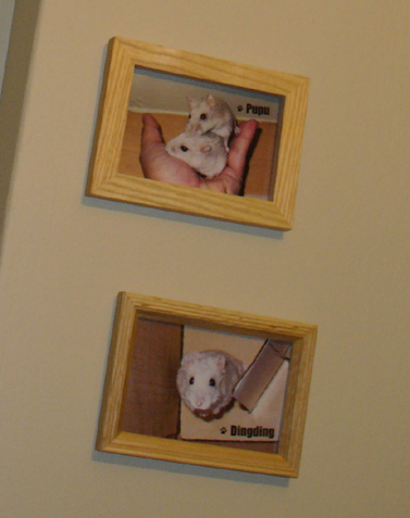 pudding cafe with pudding frames_close up
